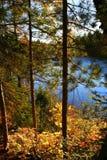 Árboles del tiempo del otoño Fotos de archivo libres de regalías