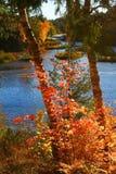 Árboles del tiempo del otoño Fotografía de archivo libre de regalías