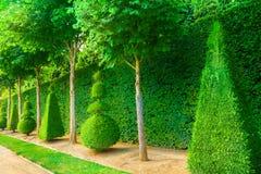 árboles del topiary Imagen de archivo libre de regalías