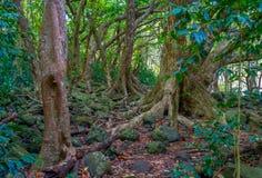 Árboles del valle de Iao Imagen de archivo