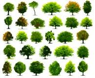 Árboles del vector Imágenes de archivo libres de regalías