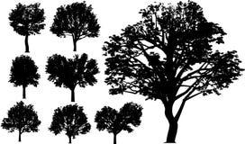 Árboles del vector Foto de archivo libre de regalías