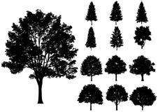 Árboles del vector aislados en un fondo blanco Fotografía de archivo