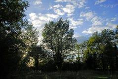 Árboles del verano Foto de archivo libre de regalías