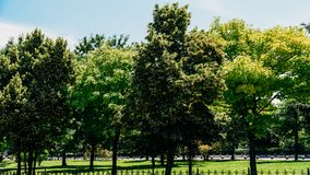 Árboles del verde del parque público en verano Fotos de archivo libres de regalías
