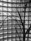 Árboles delante de los espejos imágenes de archivo libres de regalías