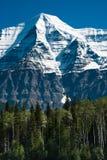 Árboles delante de Mt. Robson adentro A.C., Canadá Fotografía de archivo