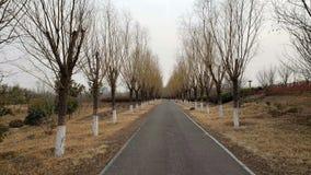 Árboles deprimidos a ambos lados del camino del otoño imagen de archivo libre de regalías