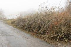 Árboles derribados cerca de la charca Tocones, ramas y serrín Imagen de archivo libre de regalías