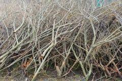 Árboles derribados cerca de la charca Tocones, ramas y serrín Foto de archivo