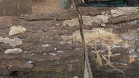 Árboles derribados maderero con las motosierras 4K almacen de video