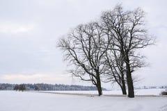 Árboles descubiertos Fotos de archivo