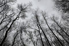 Árboles descubiertos Foto de archivo