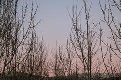 Árboles descubiertos Imágenes de archivo libres de regalías