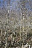 Árboles descubiertos Fotografía de archivo libre de regalías
