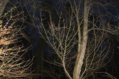 Árboles descubiertos Fotografía de archivo