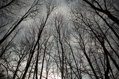 Árboles descubiertos contra el cielo Fotografía de archivo libre de regalías