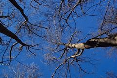 Árboles descubiertos del invierno fotos de archivo libres de regalías