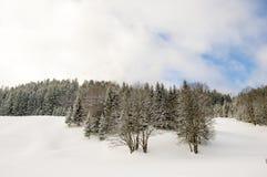 Árboles descubiertos del invierno Fotografía de archivo