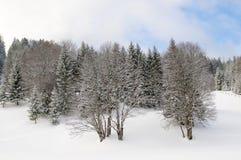 Árboles descubiertos del invierno Imagenes de archivo