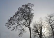Árboles descubiertos del invierno Foto de archivo
