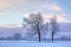 Árboles descubiertos del invierno en el amanecer Fotos de archivo libres de regalías