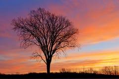 Árboles descubiertos en el amanecer Imágenes de archivo libres de regalías