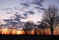 Árboles descubiertos en la puesta del sol Fotografía de archivo