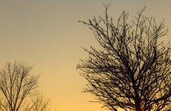 Árboles descubiertos en la puesta del sol Imagenes de archivo