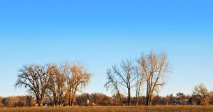 Árboles descubiertos grandes y horizonte del Cottonwood imagen de archivo libre de regalías
