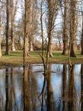 Árboles descubiertos reflejados en agua Imágenes de archivo libres de regalías