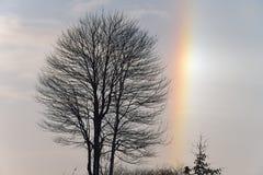 Árboles descubiertos y Sundog Imagen de archivo libre de regalías