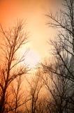 Árboles deshojados contra el fondo de la oscuridad del invierno Foto de archivo libre de regalías