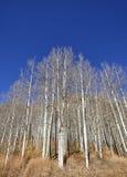 Árboles deshojados del otoño en un día soleado Imágenes de archivo libres de regalías