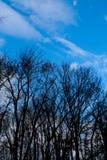Árboles deshojados en invierno Imágenes de archivo libres de regalías