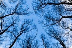 Árboles deshojados en invierno Imagen de archivo libre de regalías