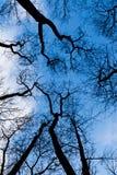 Árboles deshojados en invierno Foto de archivo libre de regalías