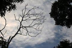 Árboles deshojados y puesta del sol del cielo por la tarde Foto de archivo