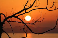 Árboles deshojados y puesta del sol roja del cielo por la tarde Fotografía de archivo