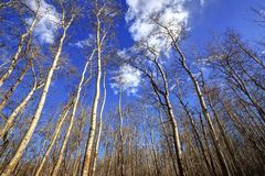 Árboles desnudos de un bosque del otoño Imágenes de archivo libres de regalías