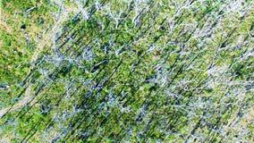 Árboles desnudos del parque nacional de Otway del cabo en Australia Imagen de archivo