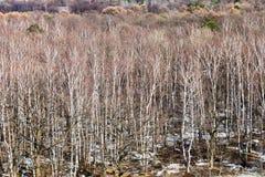 Árboles desnudos en el borde de madera Fotos de archivo libres de regalías
