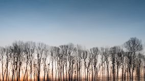 Árboles desnudos en el fondo crepuscular Fondo de la primavera Árboles y el cielo Cielo azul con los árboles Naturaleza del resor imágenes de archivo libres de regalías