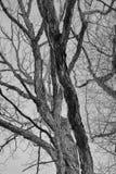 Árboles desnudos en monocromo Imagen de archivo