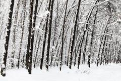 árboles desnudos en parque urbano nevado en invierno Foto de archivo