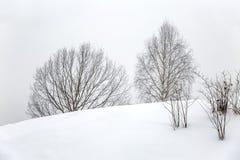 Árboles desnudos en tiempo nublado en un paisaje del invierno minimalism Espacio para el texto fotografía de archivo libre de regalías