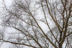 Árboles desnudos en tiempo nublado en un paisaje del invierno minimalism Espacio para el texto imagen de archivo