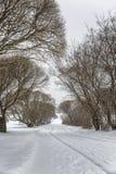 Árboles desnudos en tiempo nublado en un paisaje del invierno minimalism Espacio para el texto fotos de archivo