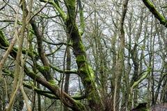 Árboles desnudos en un arbolado Fotos de archivo