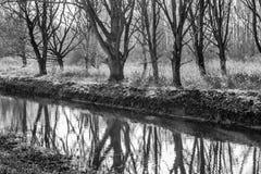 Árboles desnudos oscuros reflejados en el agua Imagen de archivo libre de regalías